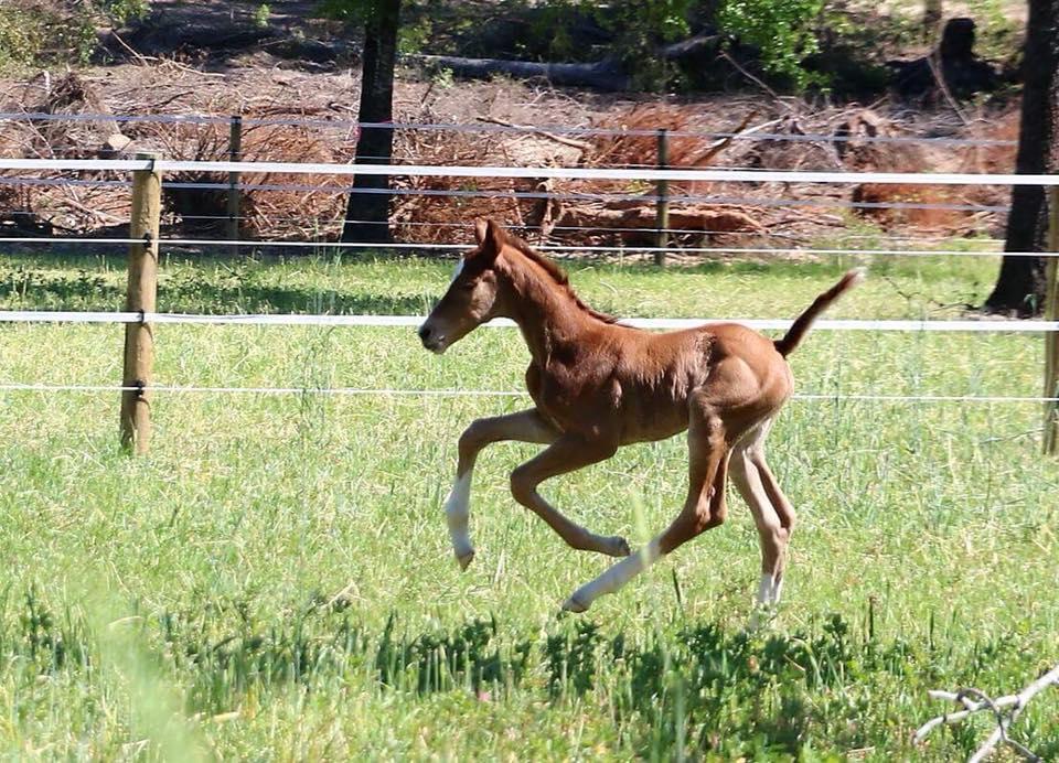 top foal