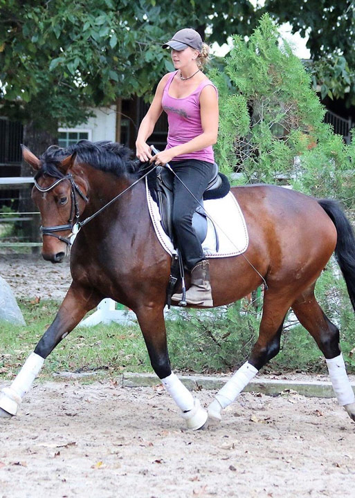 sport horse products and services - Schneiders Sporthorses